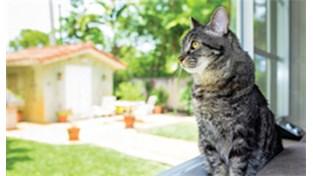Obrázek největší kočička