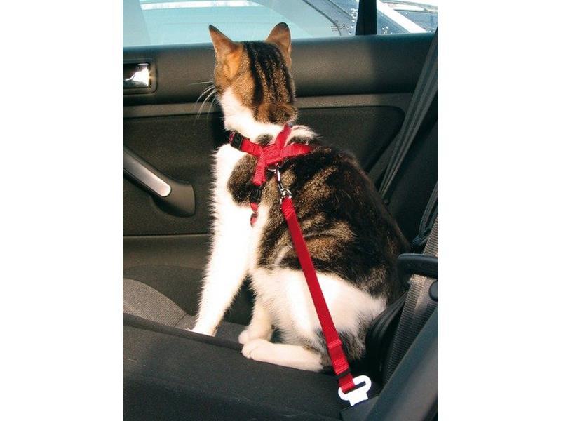 Postroj pro kočky TRIXIE 20 - 50 cm