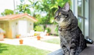 Věděli jste, že kočka je největší spáč mezi savci? Spí až 16 hodin denně!