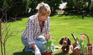 Jak udělat svou zahradu co nejkrásnější